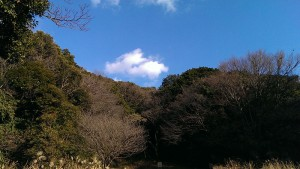 自然観察ゾーン