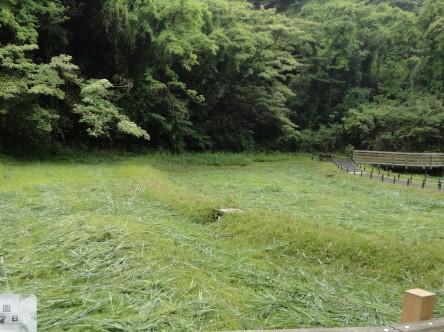 自然観察ゾーン芦刈